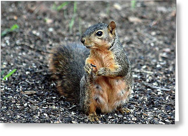 Fox Squirrel Breakfast Greeting Card