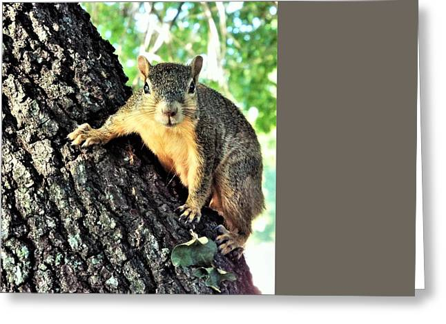 Fox Squirrel Greeting Card by Michael Dillon