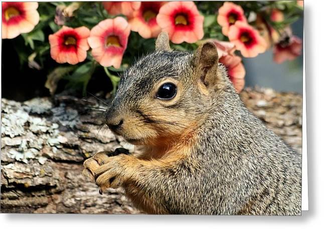 Fox Squirrel Portrait Greeting Card