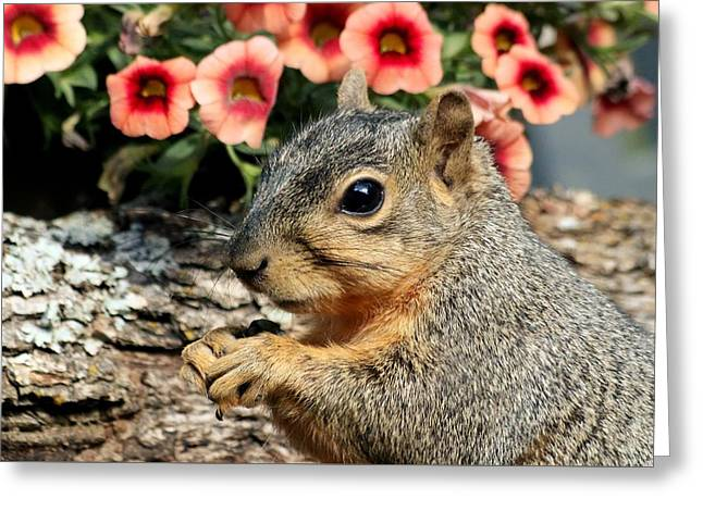 Fox Squirrel Portrait Greeting Card