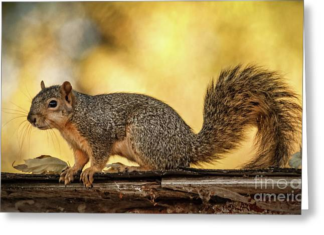 Fox Squirrel Profile Greeting Card