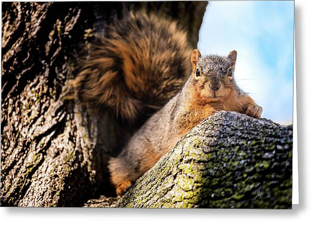 Fox Squirrel Watching Me Greeting Card by Onyonet  Photo Studios