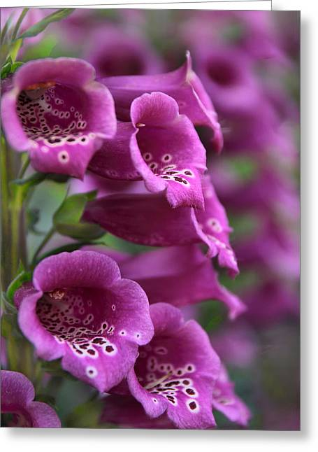 Foxglove Greeting Card by Jessica Jenney