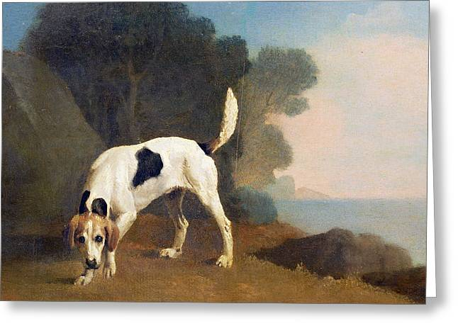 Hunting Greeting Cards - Foxhound on the Scent Greeting Card by George Stubbs