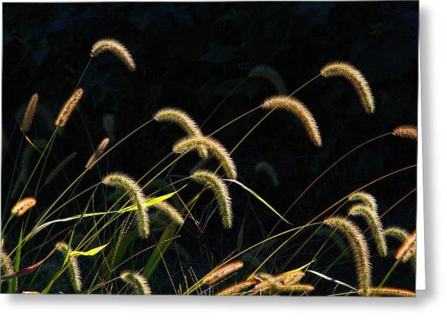 Foxtails Greeting Card