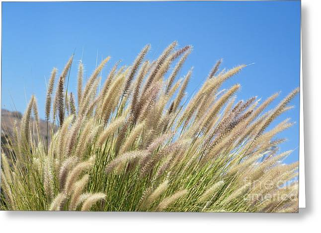 Foxtails On A Hill Greeting Card