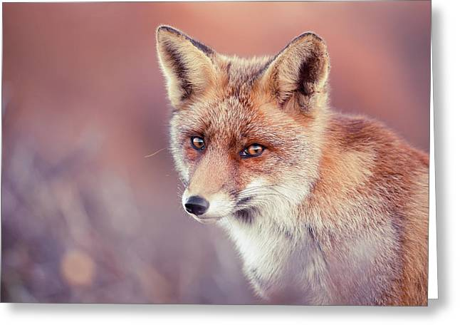 Foxy Face Series - Irresistible Greeting Card