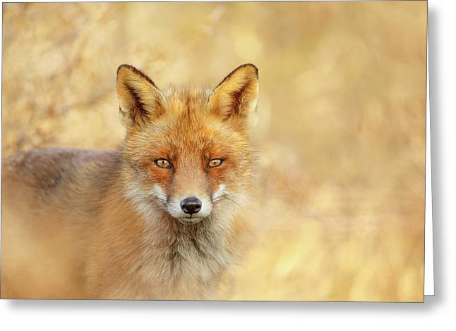 Foxy Faces Series- That Look Greeting Card by Roeselien Raimond