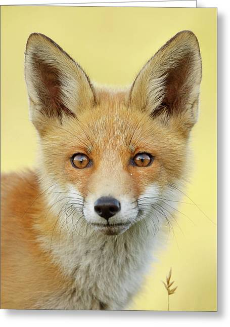 Foxy Faces Series- Young And Eager Fox Greeting Card