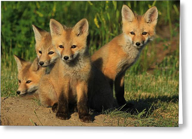 Foxy Four Greeting Card
