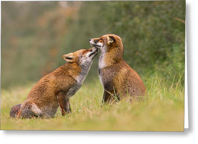 Foxy Love- Kiss Greeting Card by Roeselien Raimond