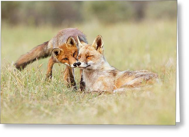Foxy Love - Mother Fox And Fox Kit Greeting Card by Roeselien Raimond