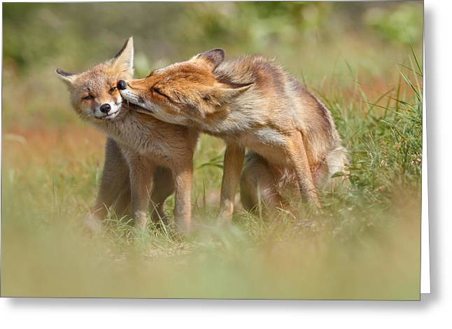 Foxy Love Series - But Mo-om II Greeting Card by Roeselien Raimond