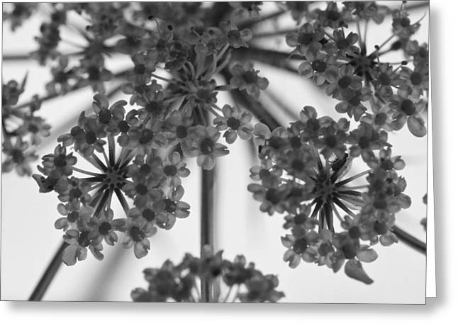 Fractal Flower Photoset 02 Greeting Card by Ryan Kelly