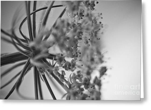 Fractal Flower Photoset 03 Greeting Card by Ryan Kelly