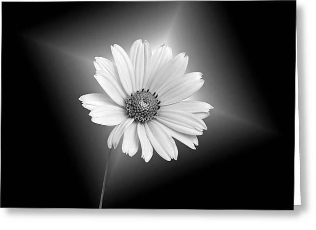 Fragile Beauty Greeting Card by Maria Dryfhout