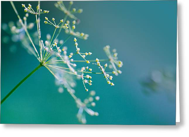 Fragile Dill Umbels Greeting Card by Nailia Schwarz