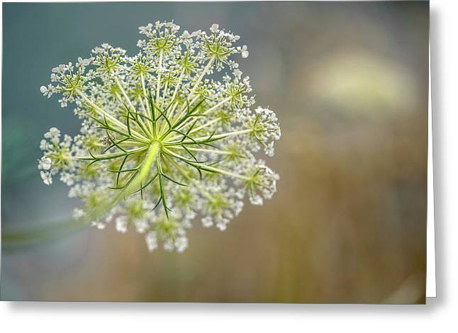 Fragile Dill Umbels On Summer Meadow Greeting Card by Nailia Schwarz