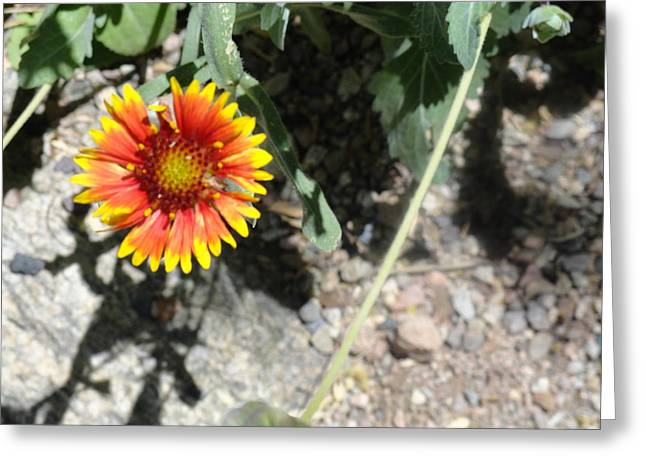 Fragile Floral Life On The Trail Greeting Card
