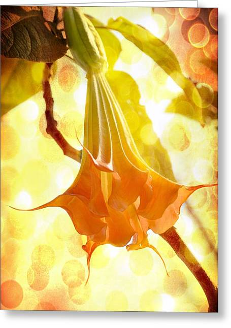 Fragile Trumpet Greeting Card by Jan Amiss Photography