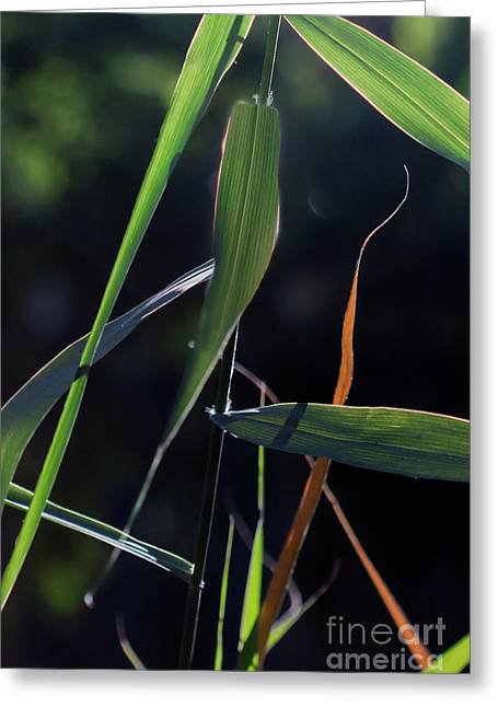 Greeting Card featuring the photograph Fragment by Linda Lees