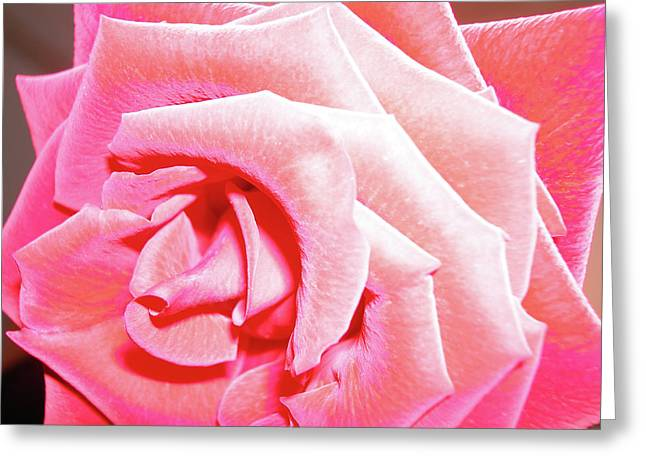 Greeting Card featuring the photograph Fragrant Rose by Marie Hicks