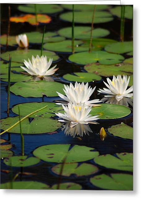 Fragrant Water Lily Greeting Card by Christine Savino