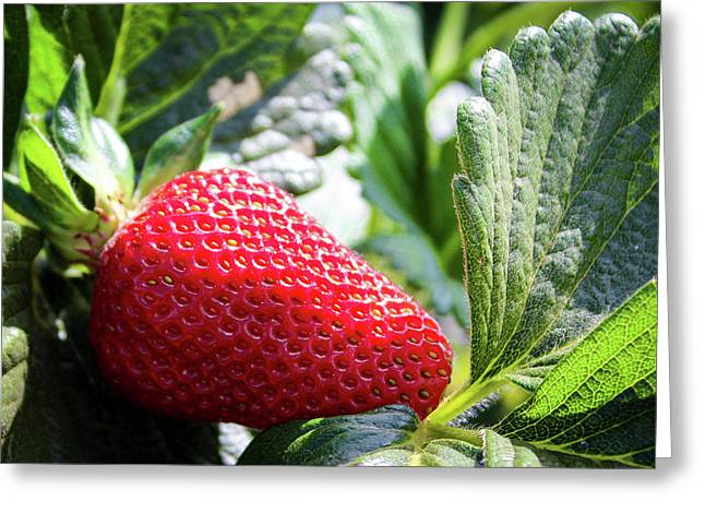 Fraise Greeting Card