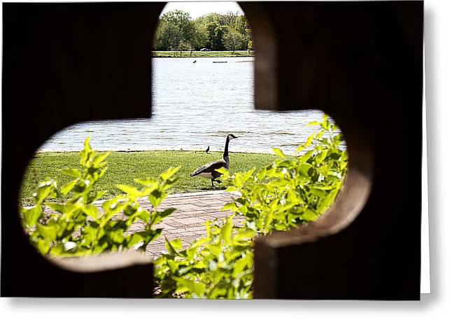 Framed Nature Greeting Card