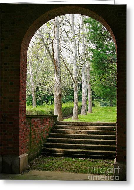 Sycamore Greeting Cards - Framed Sycamores Greeting Card by Susan Isakson