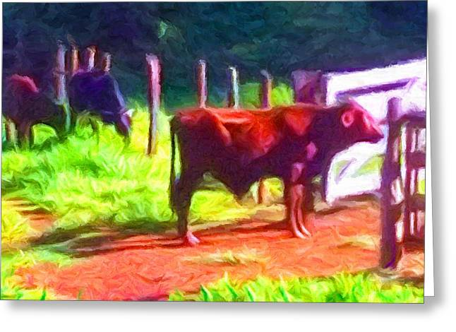Franca Cattle 2 Greeting Card
