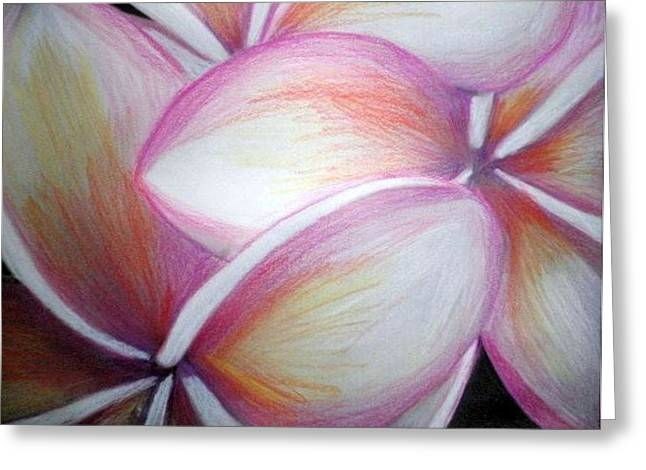 Frangipani Greeting Card by Miss McLean