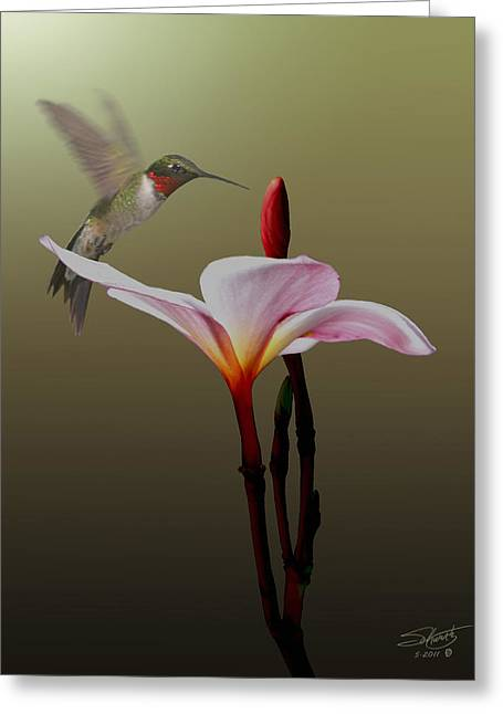 Frangipani Flower And Hummingbird Greeting Card