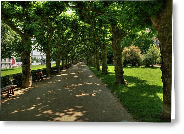 Greeting Card featuring the photograph Frankfurt - Sycamore Alley 001 by Lance Vaughn