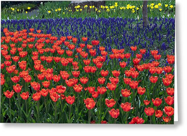 Franklin Park Conservatory Tulips 2015 Greeting Card by Mindy Newman