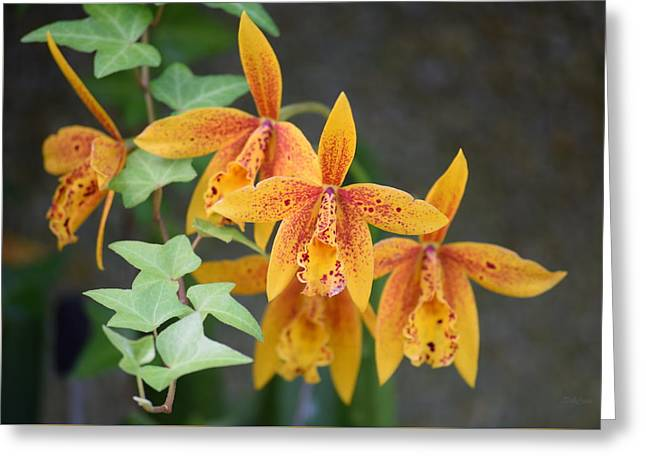 Freckled Flora Greeting Card by Deborah  Crew-Johnson