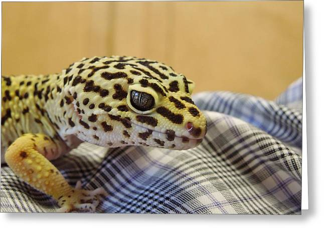 Freckles The Leopard Spotted Gecko Greeting Card by Chad and Stacey Hall