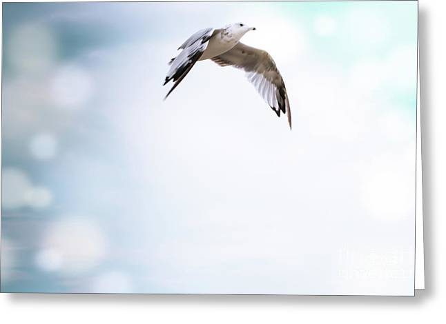 Free As A Bird Greeting Card by Colleen Kammerer