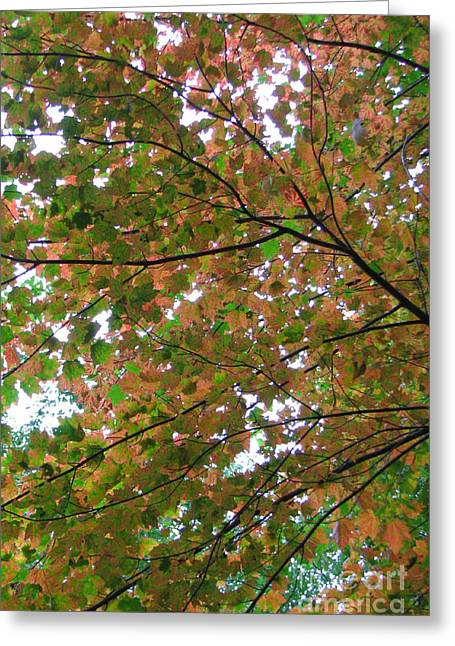 Free Fall Greeting Card