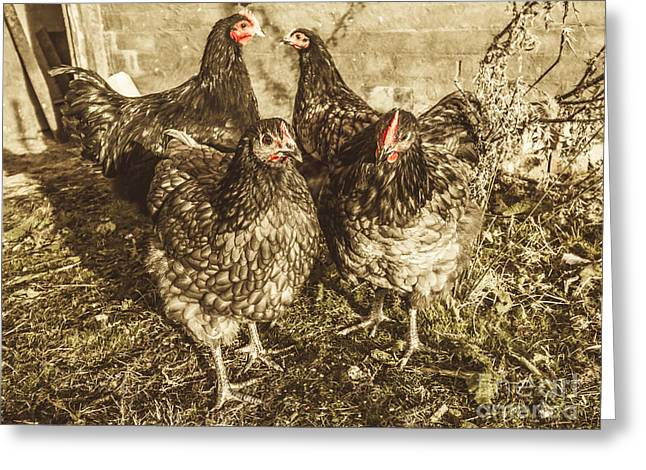 Free Range Poultry Greeting Card