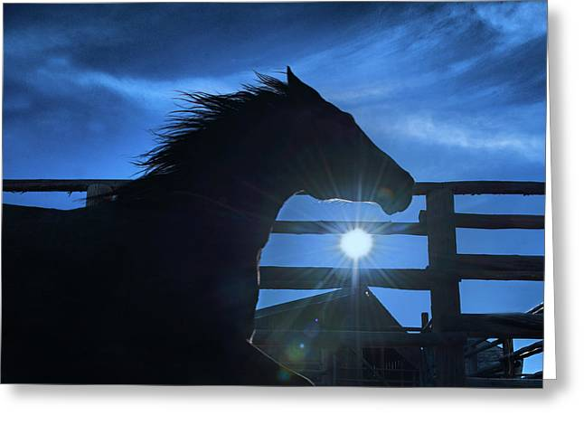 Free Spirit Horse Greeting Card