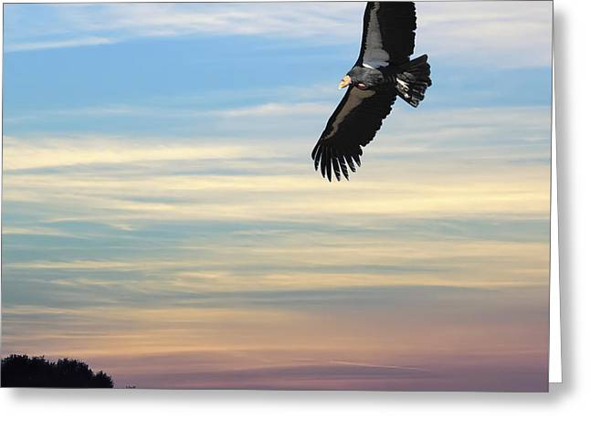 Free To Fly Again - California Condor Greeting Card