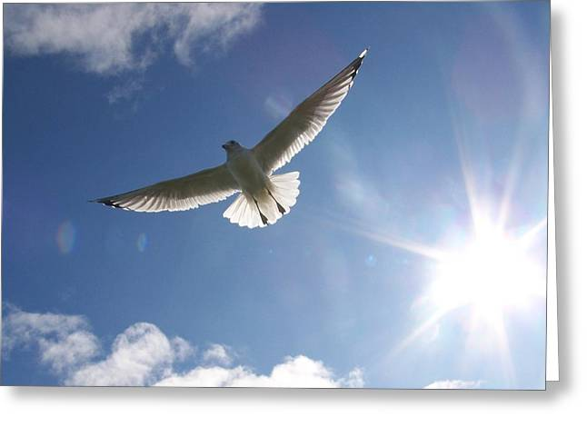 Freedom - Photograph Greeting Card by Jackie Mueller-Jones