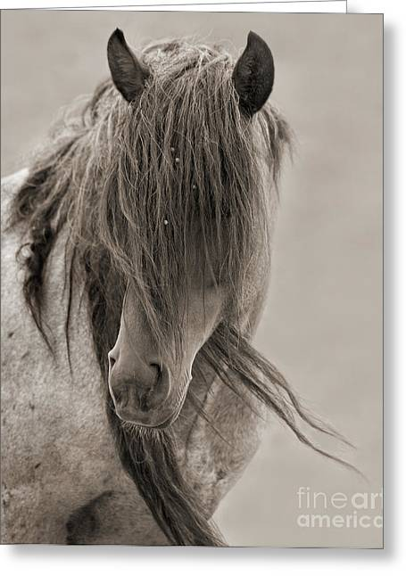 Wild Horses Greeting Cards - Freedom Greeting Card by Lisa Dearing