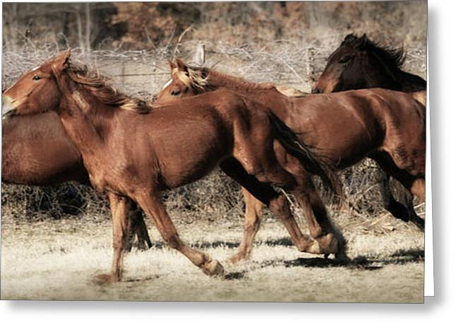 Race Horse Greeting Cards - Freedom Run Greeting Card by Amy Spivey