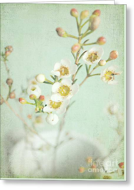 Freesia Blossom Greeting Card