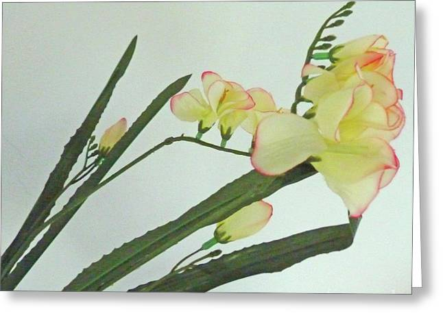 Freesia Blossoms In Pastel Colors Greeting Card