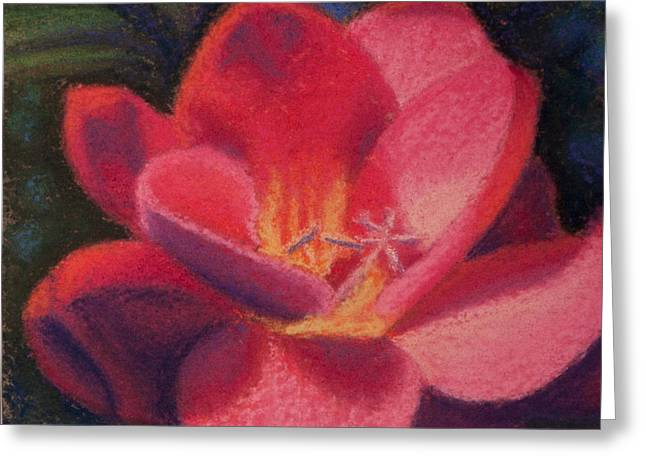 Freesia Dawn Greeting Card