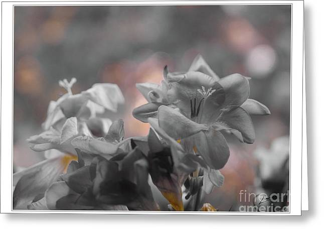 Freesia'a Without Colour Greeting Card