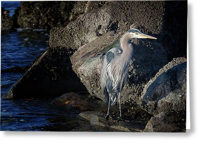 Greeting Card featuring the photograph French Creek Heron by Randy Hall